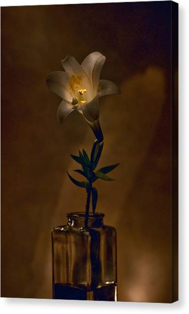 Flashlight Series Easter Lily 4 Canvas Print