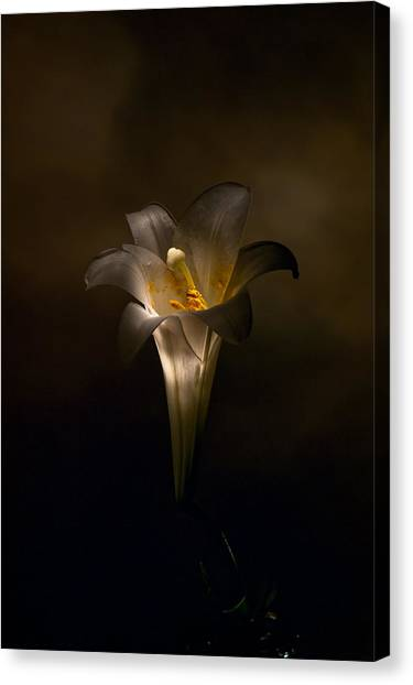 Flashlight Series Easter Lily 5 Canvas Print