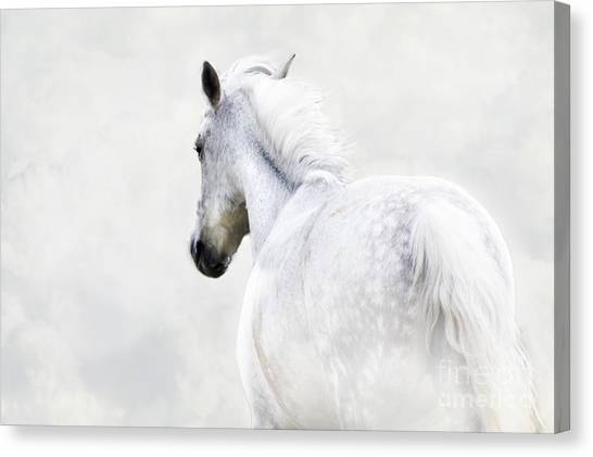 Fleeing Grey Horse Canvas Print