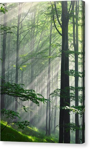 Fleeting Beams Canvas Print