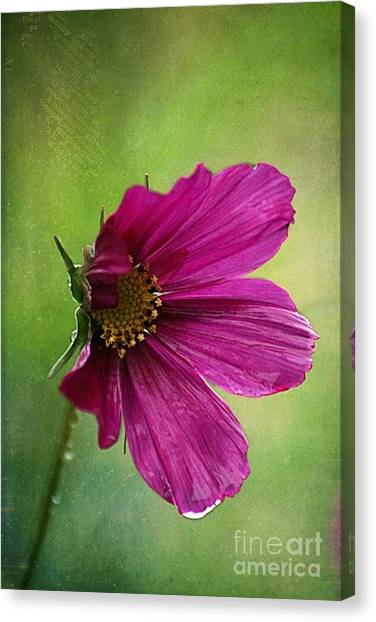 Cosmos Flower Canvas Print - Fleurina 02 - 03t01a by Variance Collections