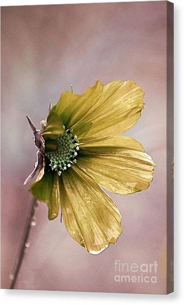 Cosmos Flower Canvas Print - Fleurina 02 - 14b by Variance Collections