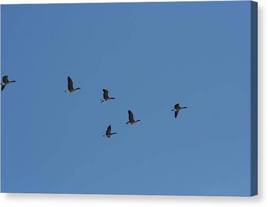 Flight Canvas Print by Gregory Jeffries