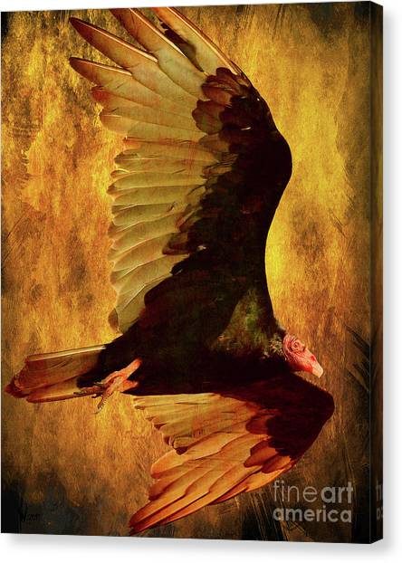 Undertaker Canvas Print - Flight Of A Vulture . Texture . 40d8879 by Wingsdomain Art and Photography