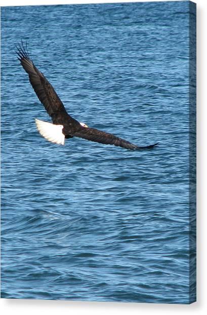 Flight Of An Eagle  Canvas Print