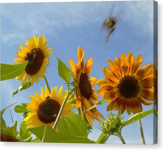 Flight Of The Bubble Bee Canvas Print by Julie Geiss
