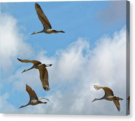 Flight Of The Cranes Canvas Print