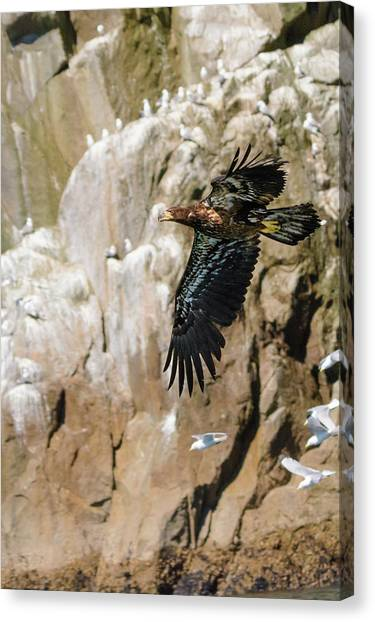 Flight Of The Intruder Canvas Print by Emily Bristor