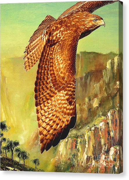 Flight Of The Red Tailed Hawk Canvas Print by Wingsdomain Art and Photography