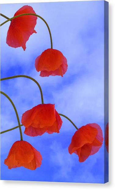 Flight Red Canvas Print
