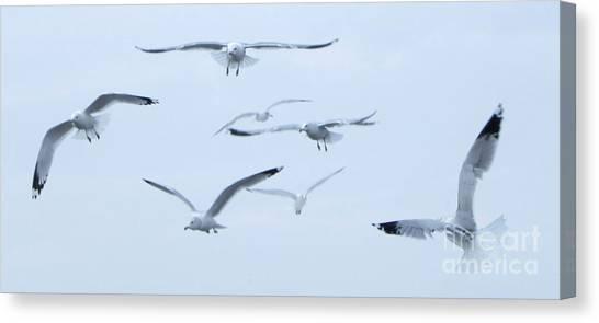 Flight Canvas Print by Steve Rudolph
