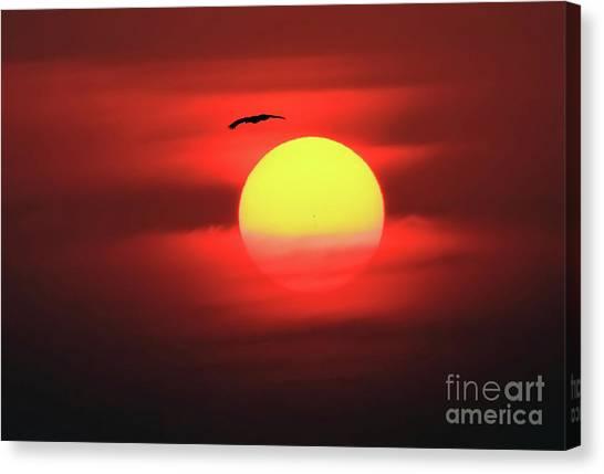 Flight To The Sun Canvas Print