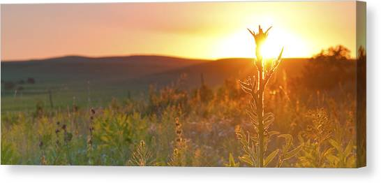 Flint Hills Sunset Canvas Print