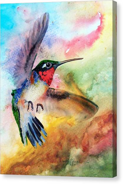 Da198 Flit The Hummingbird By Daniel Adams Canvas Print