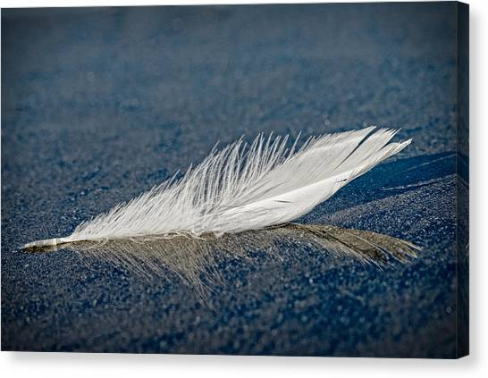 Floating Feather Reflection Canvas Print