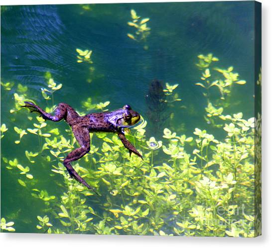 Floating Frog Canvas Print