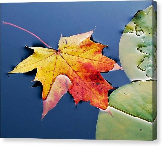 Floating Maple Leaf Canvas Print