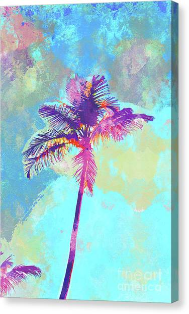 Island .oasis Canvas Print - Florida Palm by Chris Andruskiewicz