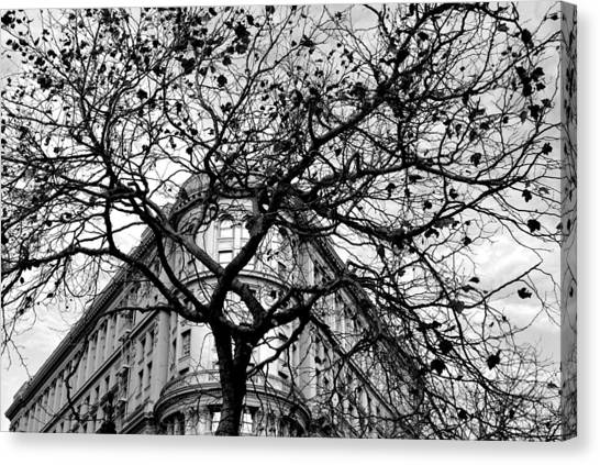 Flood Building - San Francisco - Corner Tree View Black And White Canvas Print