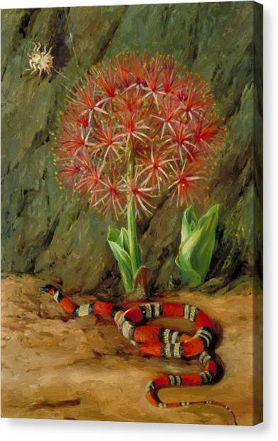 Coral Snakes Canvas Print - Flor Imperiale Coral Snake And Spider Brazil 1873 by North Marianne