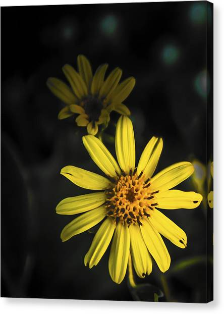 Flora In Yellow Canvas Print