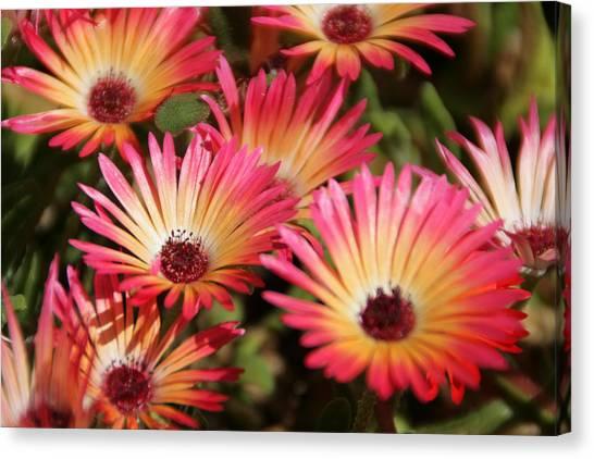 Floral Expectancy Canvas Print