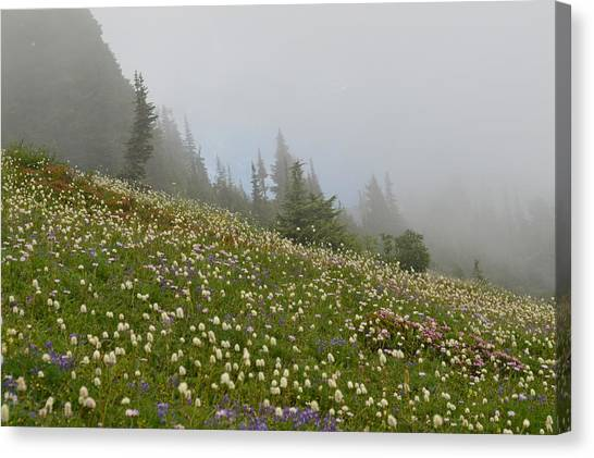 Floral Meadow Canvas Print