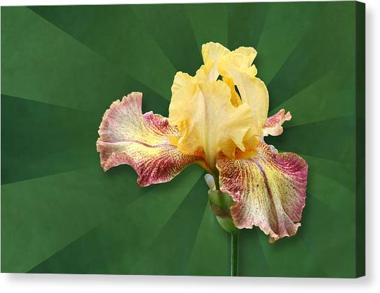 Floral Radiance Canvas Print