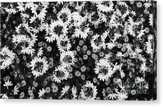 Floral Texture In Black And White Canvas Print