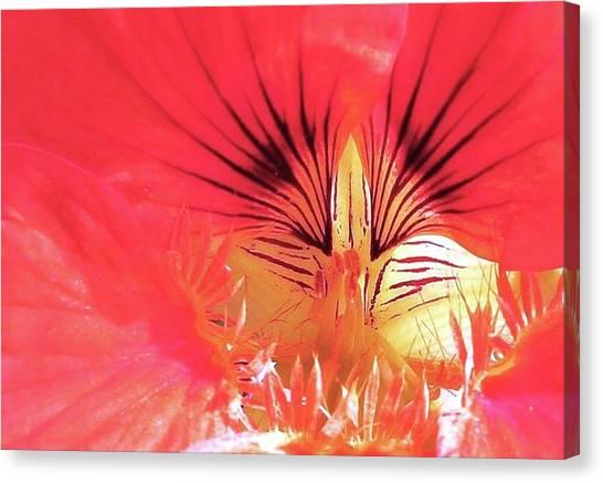 Canvas Print - Floral Variation by Slawek Aniol