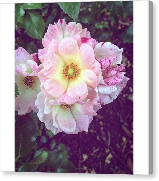 Biology Canvas Print - Flores 🌸 #tanbonitas #flores #rosado by Connie Zhong
