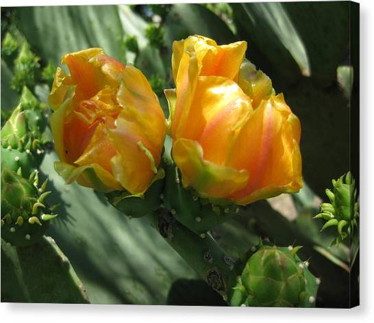 Flores De Cactus Canvas Print by Diana Moya