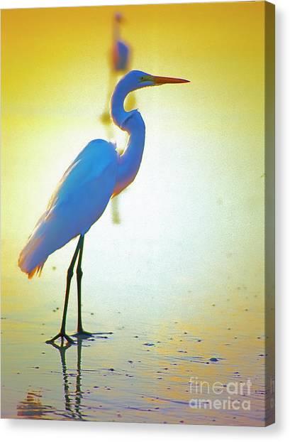 Florida Atlantic Beach Ocean Birds  Canvas Print