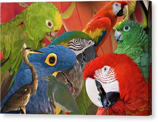 Florida Birds Canvas Print