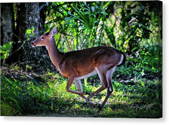 Florida Deer Canvas Print