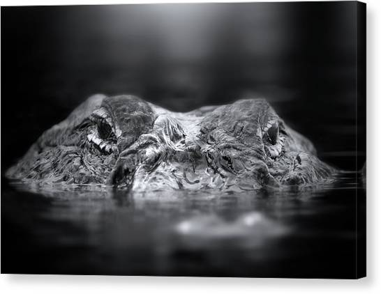 University Of Florida Canvas Print - Florida Gator by Mark Andrew Thomas