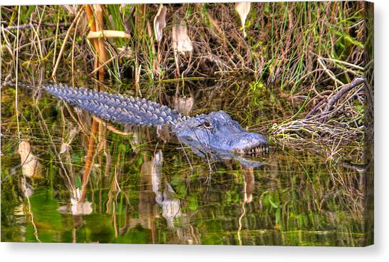 Florida Gator Canvas Print by William Wetmore