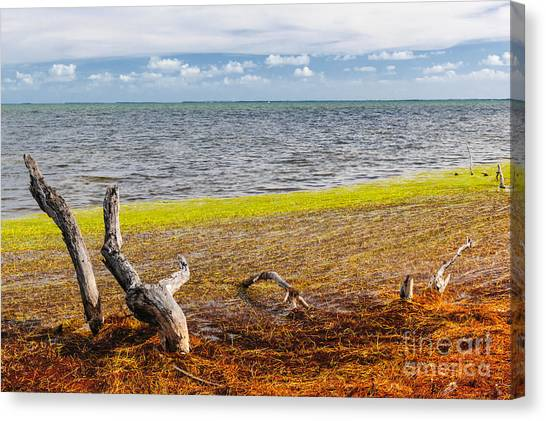 Mangrove Trees Canvas Print - Florida Keys Colors by Elena Elisseeva