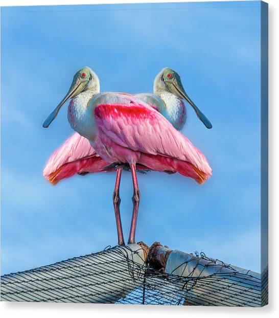 Spoonbills Canvas Print - Florida Keys Roseate Spoonbill by Betsy Knapp