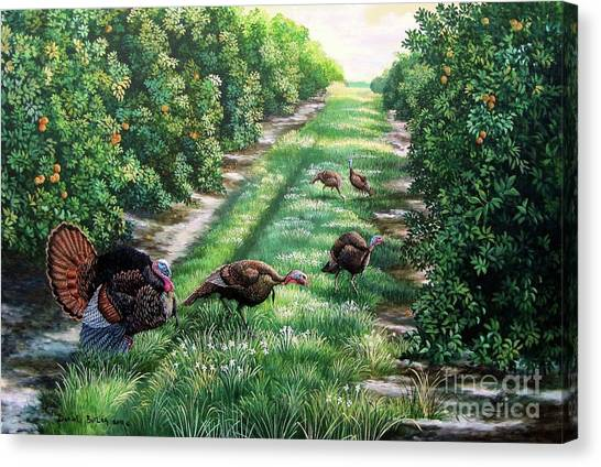 Florida Wildlife Canvas Print - Florida-orange Groves-osceola Turkeys by Daniel Butler