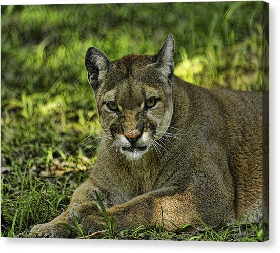 Florida Panther Agitated Canvas Print by Keith Lovejoy