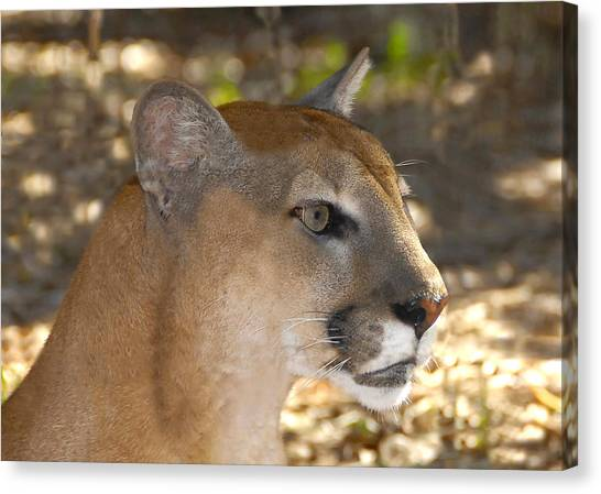 Florida Panthers Canvas Print - Florida Panther by David Lee Thompson