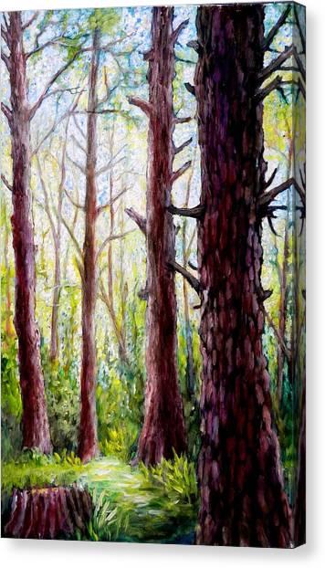 Florida Pine Forest Canvas Print by Sebastian Pierre