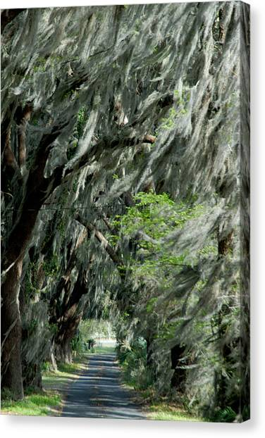 Florida Road Canvas Print