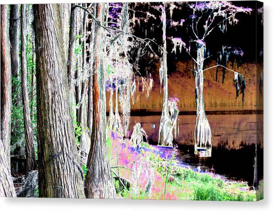 Florida Swamp Canvas Print by Peter  McIntosh