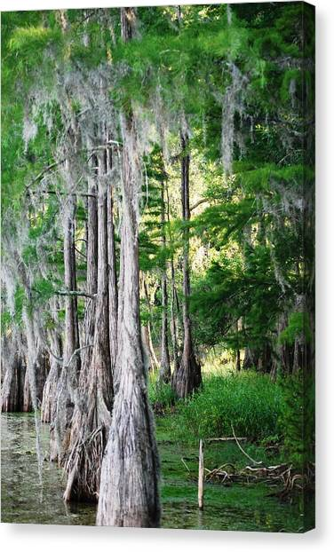 Florida Swamps Canvas Print by Peter  McIntosh
