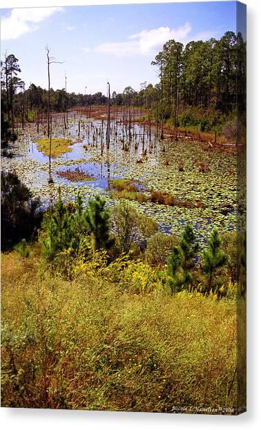 Florida Wetland Canvas Print by Nicole I Hamilton