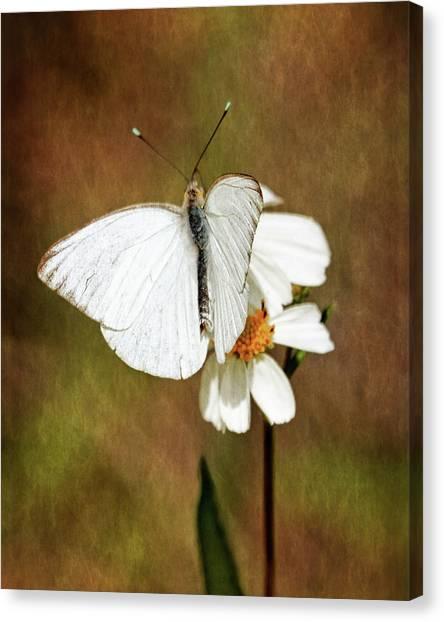 Florida White Canvas Print