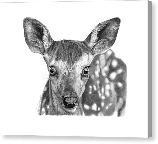 Florry The Fawn Canvas Print