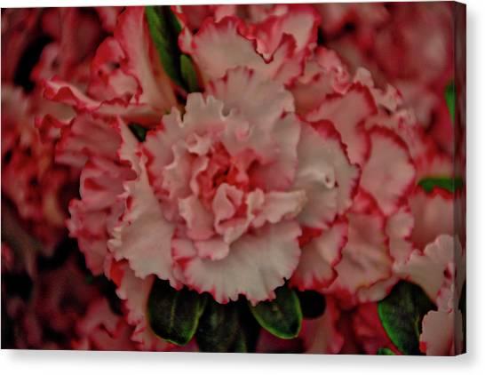 Flower 5 Canvas Print